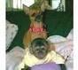 Foto Mujeres mono capuchino para la adopción