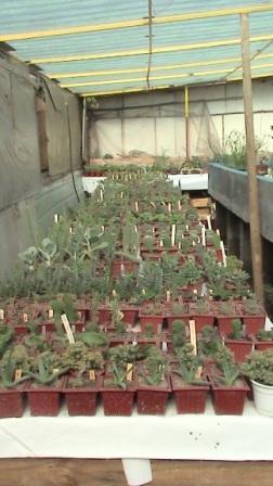 Foto Vendo cactus y suculentas desde $250 pesos más iva.