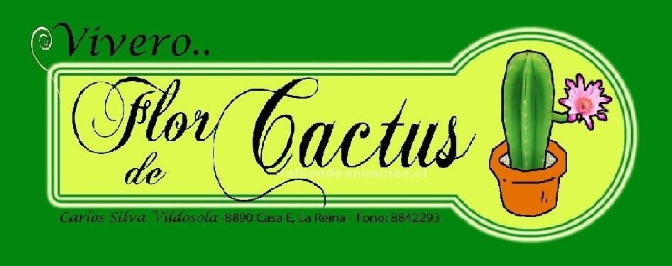 "Foto de Venta de cactus, ""vivero flor de cactus"", la reina stgo."