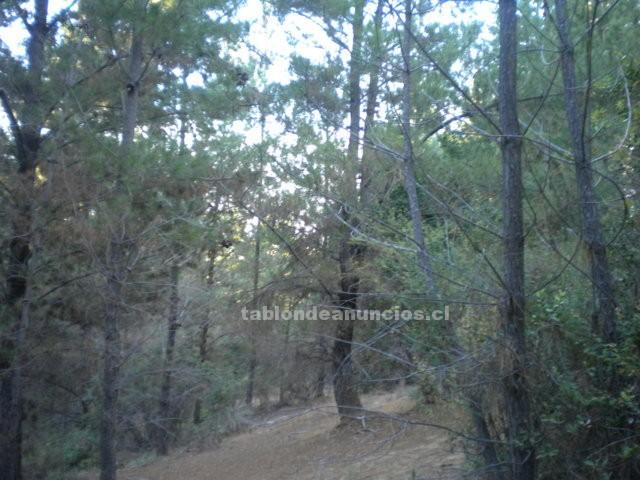 Foto Venta terreno  de montaña con pinos