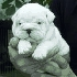 Bulldog inglés cachorros en adopción.