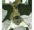 Mujeres mono capuchino para la adopción