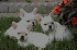 Cachorros bulldog francés para su aprobación Deportes Aventura