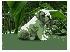 Encantadora cachorros bulldog para la adopción