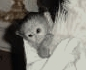 Mujeres adorable bebé mono capuchino